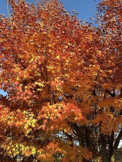 紅葉見ながら散歩_c0327752_00144093.jpg