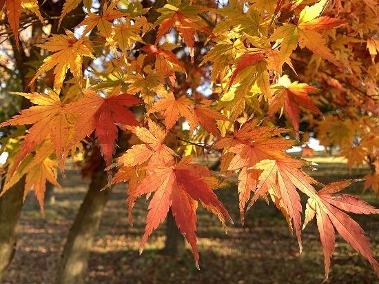紅葉見ながら散歩_c0327752_00152567.jpg