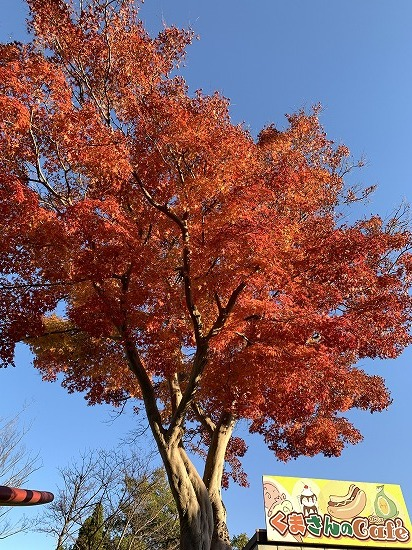 紅葉見ながら散歩_c0327752_00161349.jpg