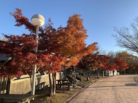 紅葉見ながら散歩_c0327752_00181202.jpg