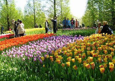 '19,11,27(水)2007年のオランダの「キューケンホフ公園」!_f0060461_11112439.jpg