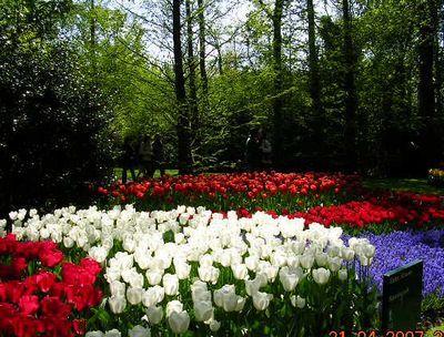 '19,11,27(水)2007年のオランダの「キューケンホフ公園」!_f0060461_11132918.jpg