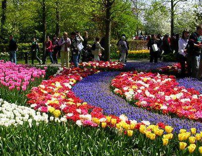 '19,11,27(水)2007年のオランダの「キューケンホフ公園」!_f0060461_11153326.jpg