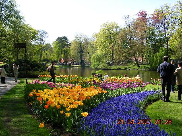 '19,11,27(水)2007年のオランダの「キューケンホフ公園」!_f0060461_11164388.jpg