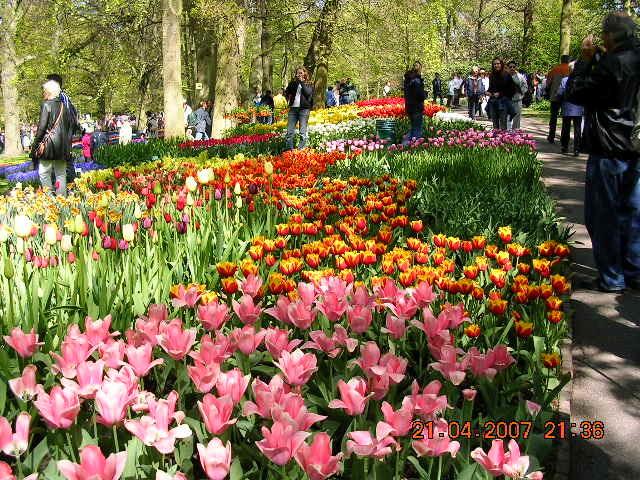 '19,11,27(水)2007年のオランダの「キューケンホフ公園」!_f0060461_11190984.jpg