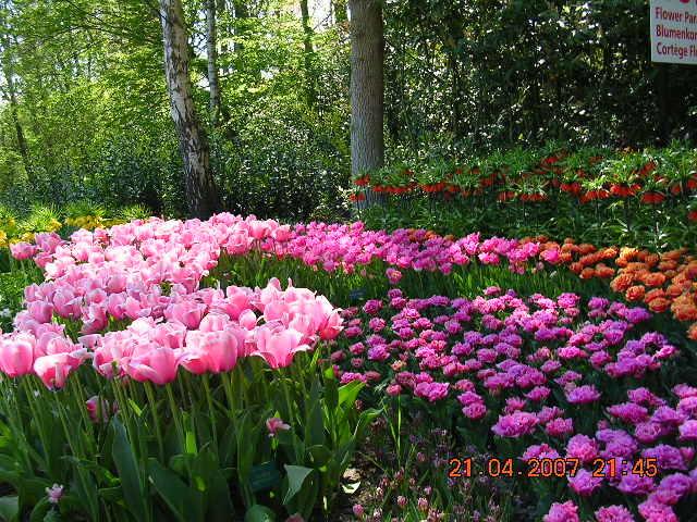 '19,11,27(水)2007年のオランダの「キューケンホフ公園」!_f0060461_11230808.jpg
