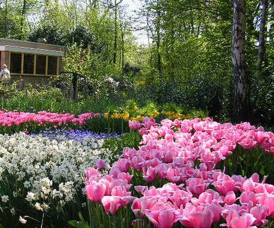 '19,11,27(水)2007年のオランダの「キューケンホフ公園」!_f0060461_11233045.jpg