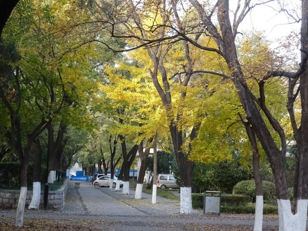 済南市、山東大学_d0193569_07361938.jpg