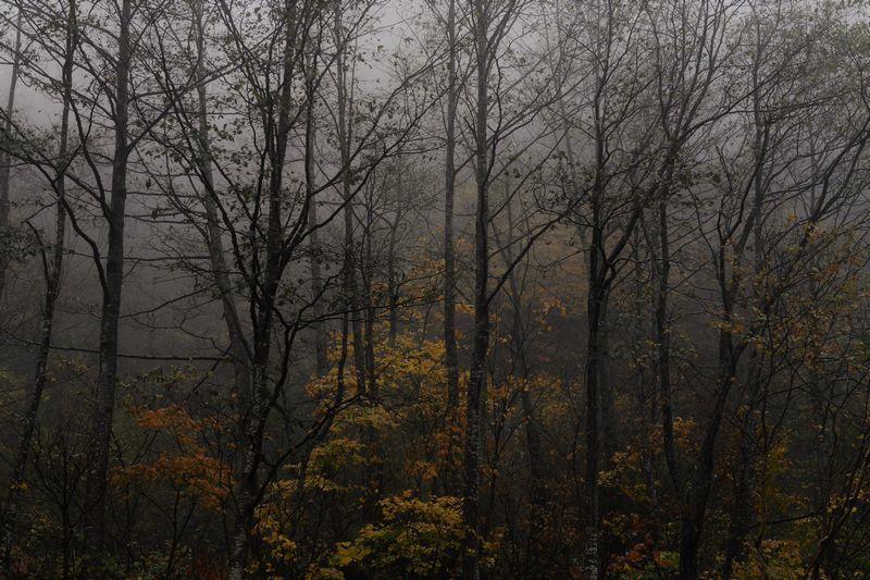 霧 雨_b0150077_22121522.jpg
