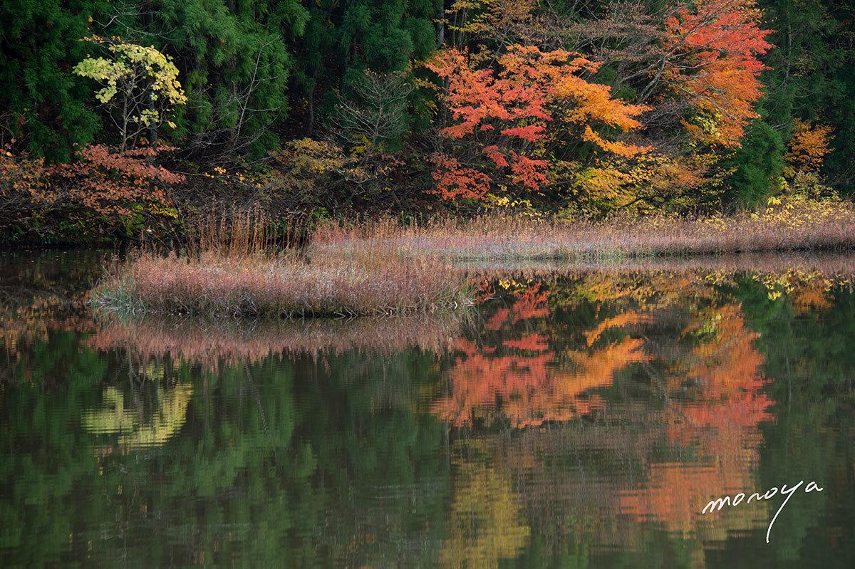 秋色の池_c0085877_06171816.jpg