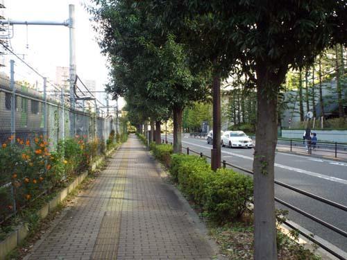 文化財ウィーク2 前田家本邸・和館・大円寺まで見たこと_f0211178_18371641.jpg
