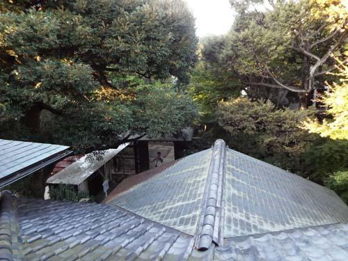 文化財ウィーク2 前田家本邸・和館・大円寺まで見たこと_f0211178_18402714.jpg