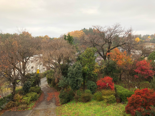 雨、雨☂️、こんなに綺麗な秋の紅葉&#127809;を見られるなんて、思いませんでした。今、この秋一番の赤です。日野春の秋、間もなく終わります。</div>_d0338282_07493532.jpg