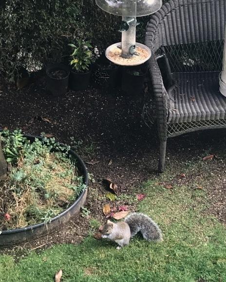 庭に来る可愛い訪問者_d0129786_08223045.jpg