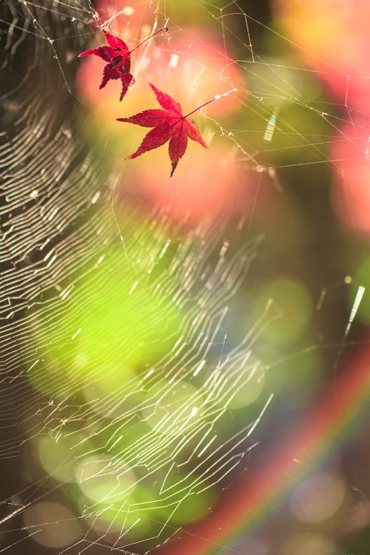 三滝寺の紅葉 2019_f0189086_19060295.jpg