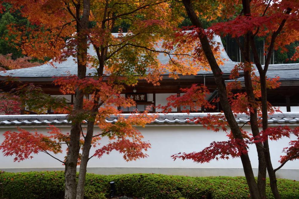 宝徳寺の紅葉_f0202686_16190826.jpg