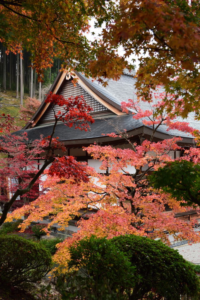宝徳寺の紅葉_f0202686_16192855.jpg