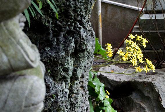 榊原温泉で恋の病の御祓(みそぎ)_b0145296_18133141.jpg
