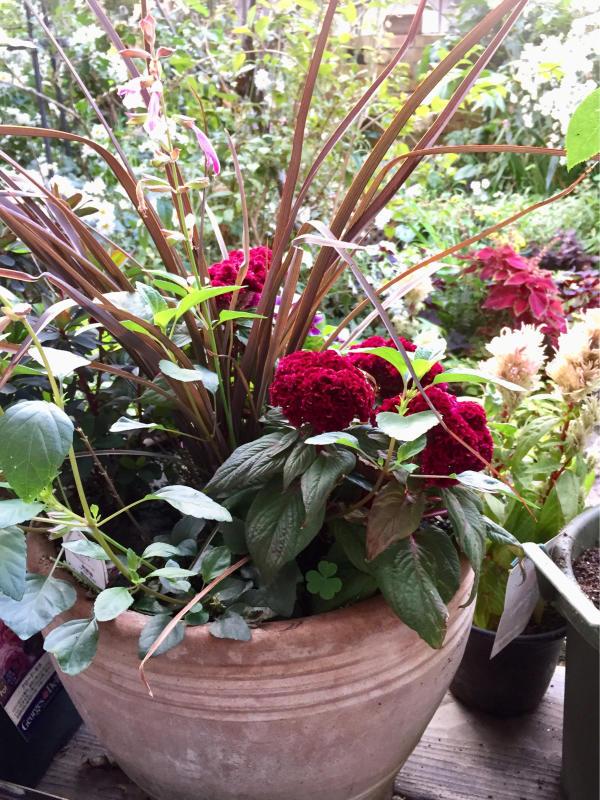 庭に元気をもらう_d0090298_20520968.jpg
