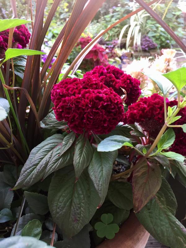庭に元気をもらう_d0090298_20552443.jpg