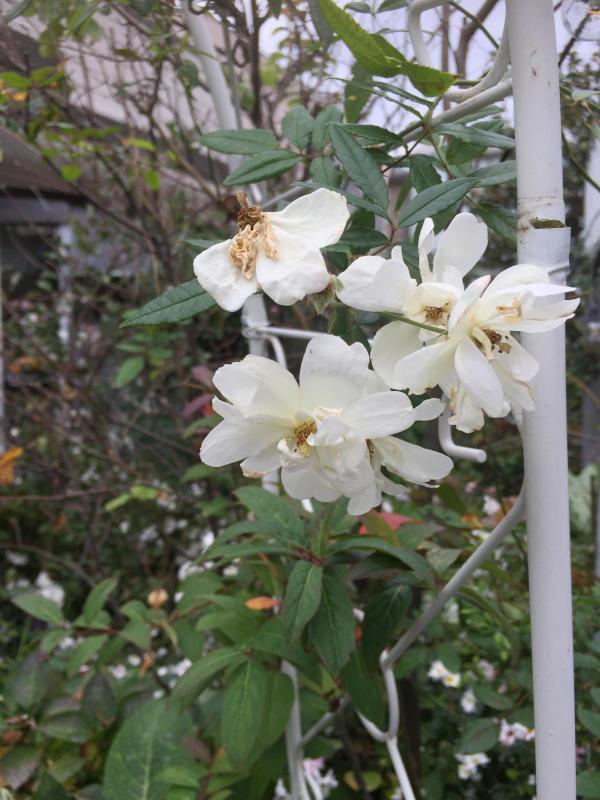 庭に元気をもらう_d0090298_20575136.jpg
