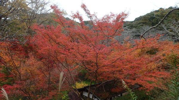 紅葉の季節_c0367107_17063318.jpg