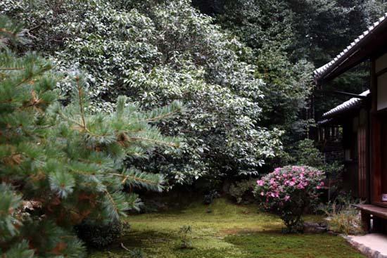 紅葉がさかり 浄住寺と地蔵院_e0048413_21063494.jpg
