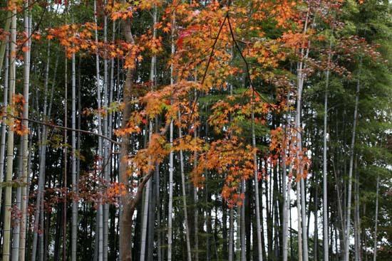 紅葉がさかり 浄住寺と地蔵院_e0048413_21064146.jpg