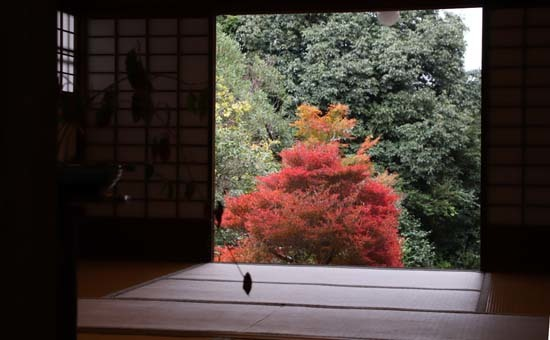 紅葉がさかり 浄住寺と地蔵院_e0048413_21070597.jpg