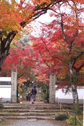 紅葉がさかり 浄住寺と地蔵院_e0048413_21071870.jpg