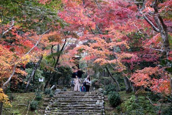 紅葉がさかり 浄住寺と地蔵院_e0048413_21071963.jpg