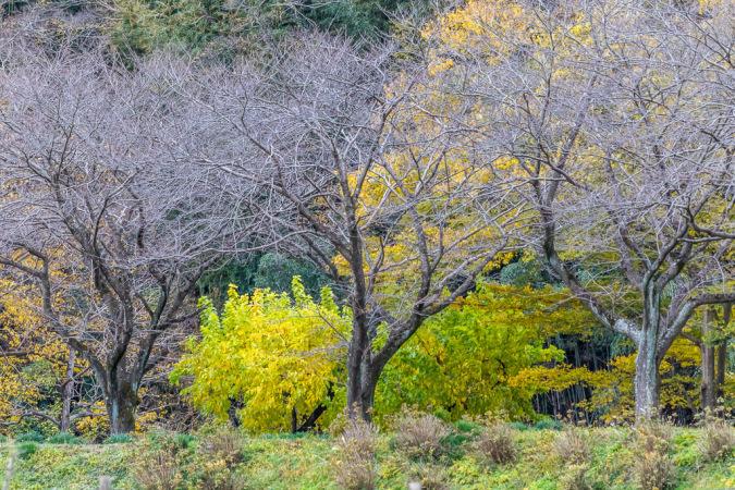 冷たい風が吹く巾着田へ_b0010915_23483581.jpg