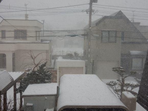 真冬日に猛吹雪がやってきた_c0025115_21411420.jpg