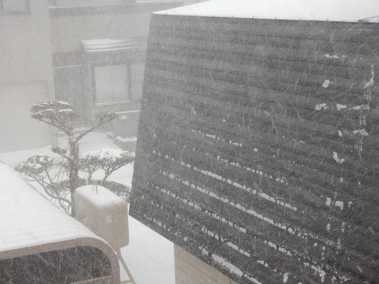真冬日に猛吹雪がやってきた_c0025115_21412180.jpg