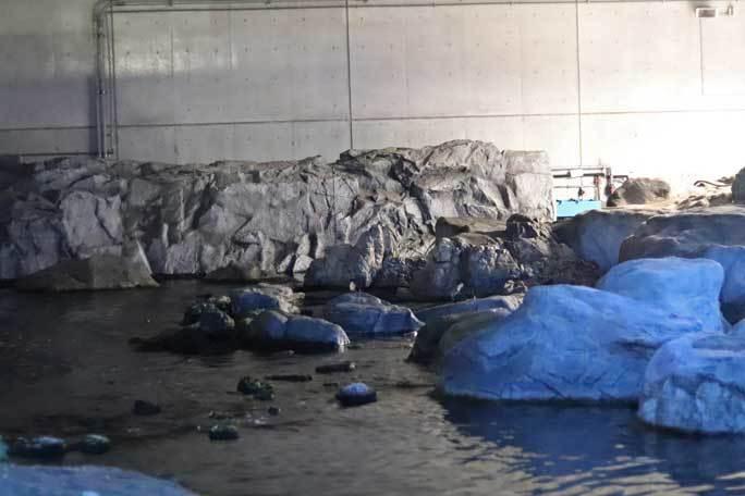 夜の不思議の葛西臨海水族園2019②:ナイト・ペンギン~ウミガラスのヒナ_b0355317_21505135.jpg