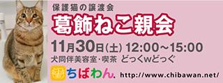 11/26 センターレポート【猫編】PART2_f0078320_00482533.jpg
