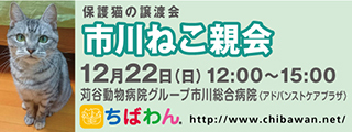 11/26 センターレポート【猫編】PART2_f0078320_00484691.jpg