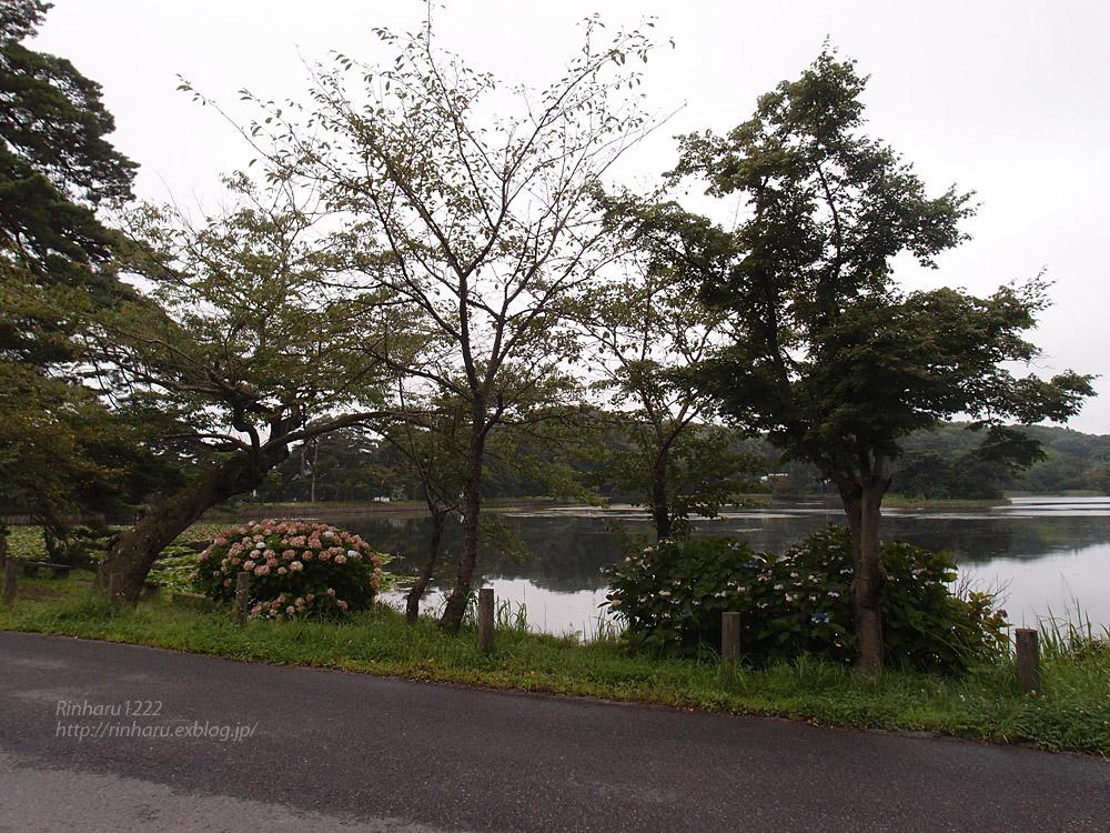 2017.8.11 南湖公園&南湖神社_f0250322_20321581.jpg