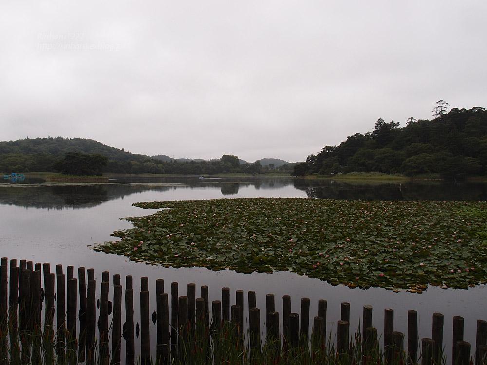 2017.8.11 南湖公園&南湖神社_f0250322_20322257.jpg