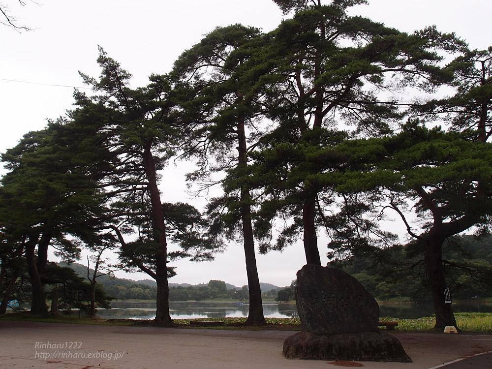 2017.8.11 南湖公園&南湖神社_f0250322_20323529.jpg
