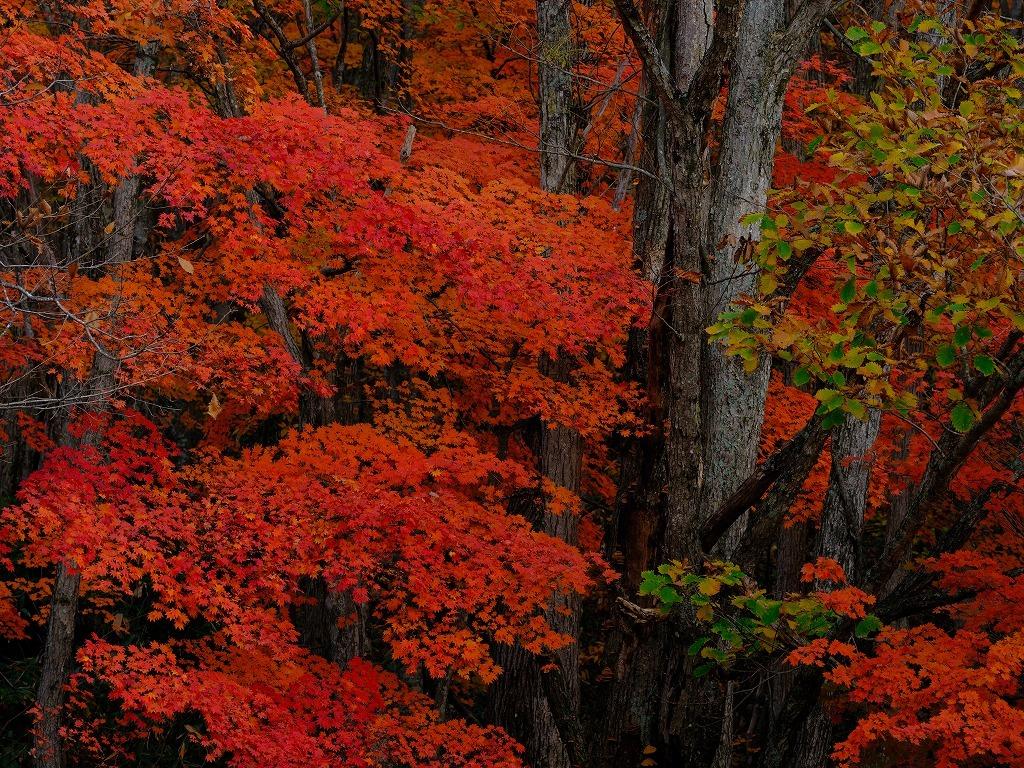 紅色深山図 FUJIFILM X Series facebookより_f0050534_13463461.jpg