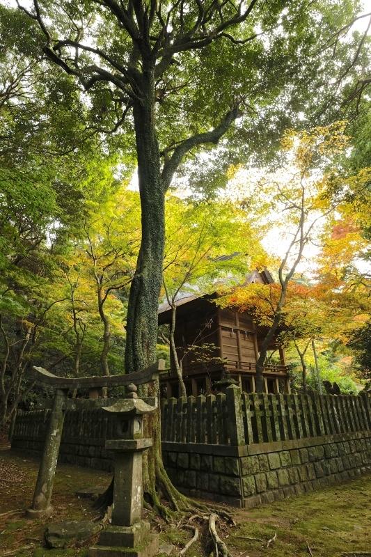 金比羅神社(長崎市)_f0315034_15461887.jpg