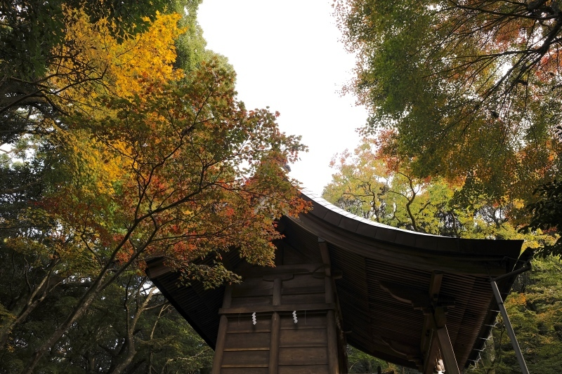 金比羅神社(長崎市)_f0315034_15472001.jpg