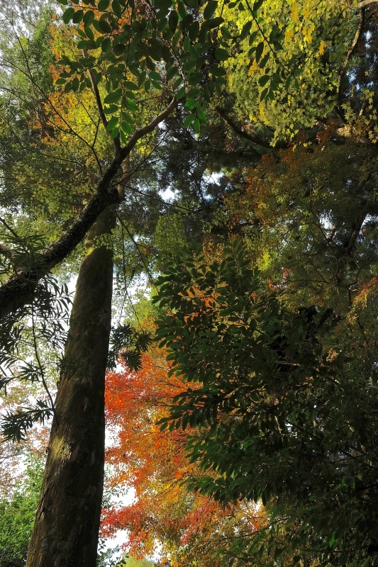 金比羅神社(長崎市)_f0315034_15482329.jpg