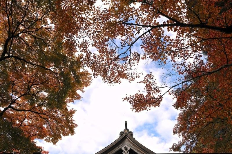 金比羅神社(長崎市)_f0315034_15491610.jpg