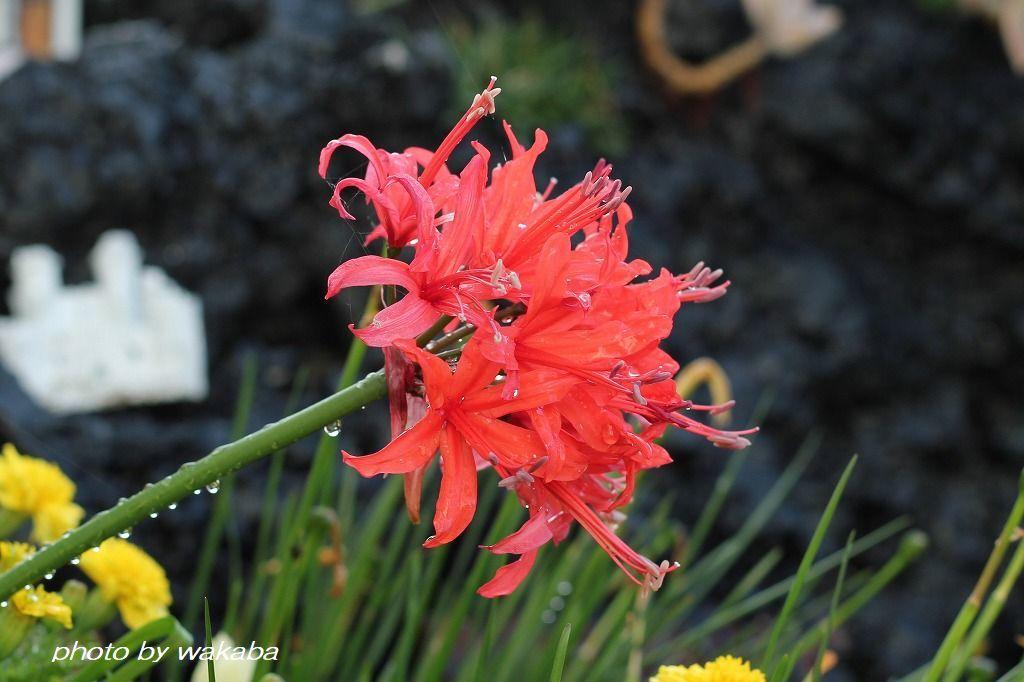 初めて出会った花々・・4種類(^^♪_e0052135_16572126.jpg