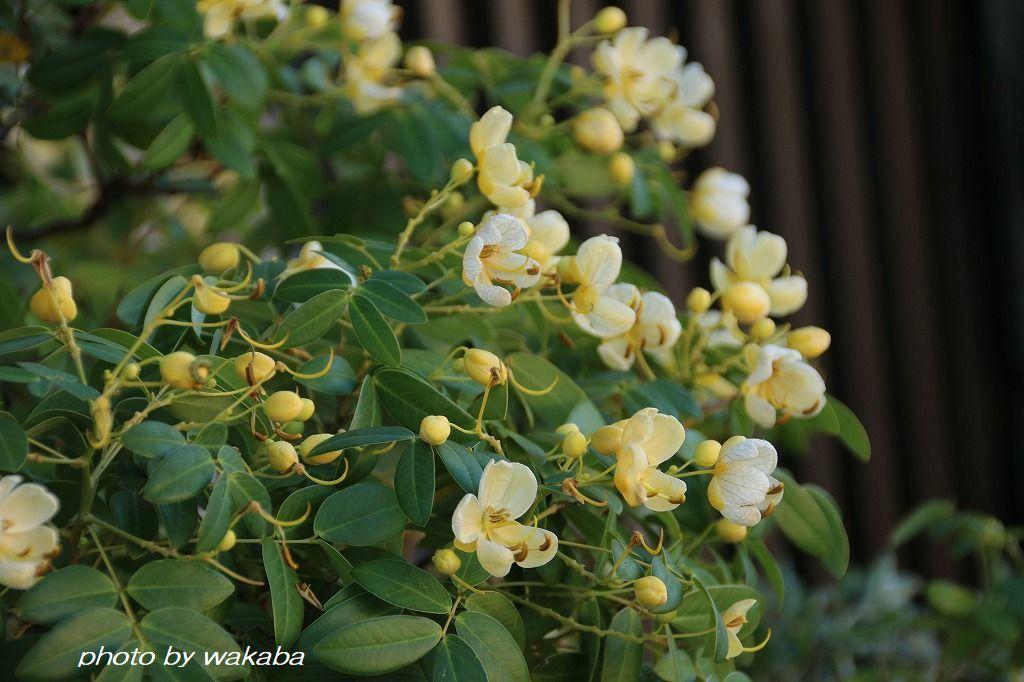 初めて出会った花々・・4種類(^^♪_e0052135_16574235.jpg
