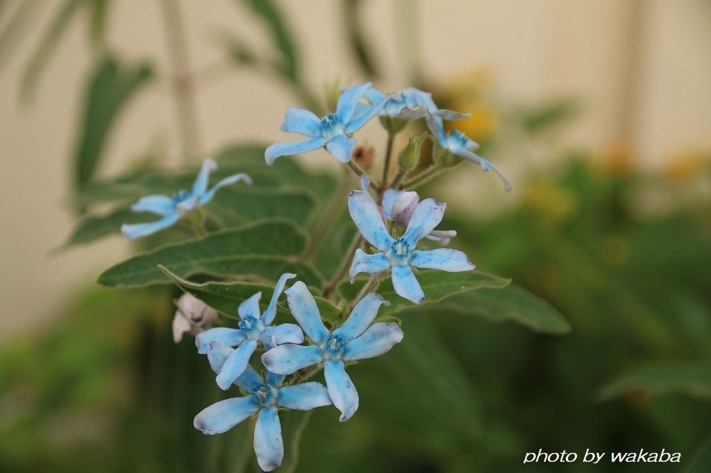 初めて出会った花々・・4種類(^^♪_e0052135_16575304.jpg