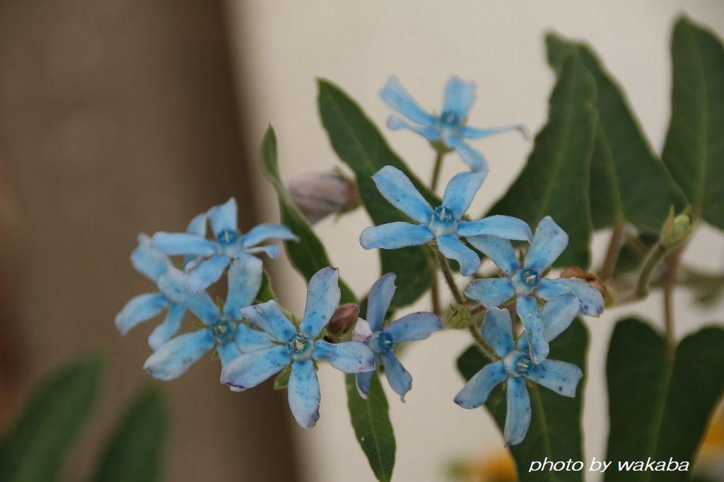 初めて出会った花々・・4種類(^^♪_e0052135_16575408.jpg