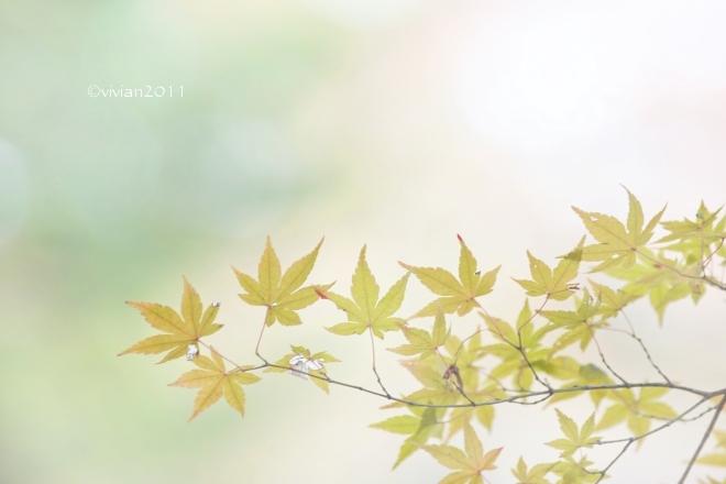 11月の撮影会 ~壬生わんぱく公園~_e0227942_22535633.jpg
